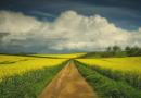Une spiritualité pour l'écologie ?